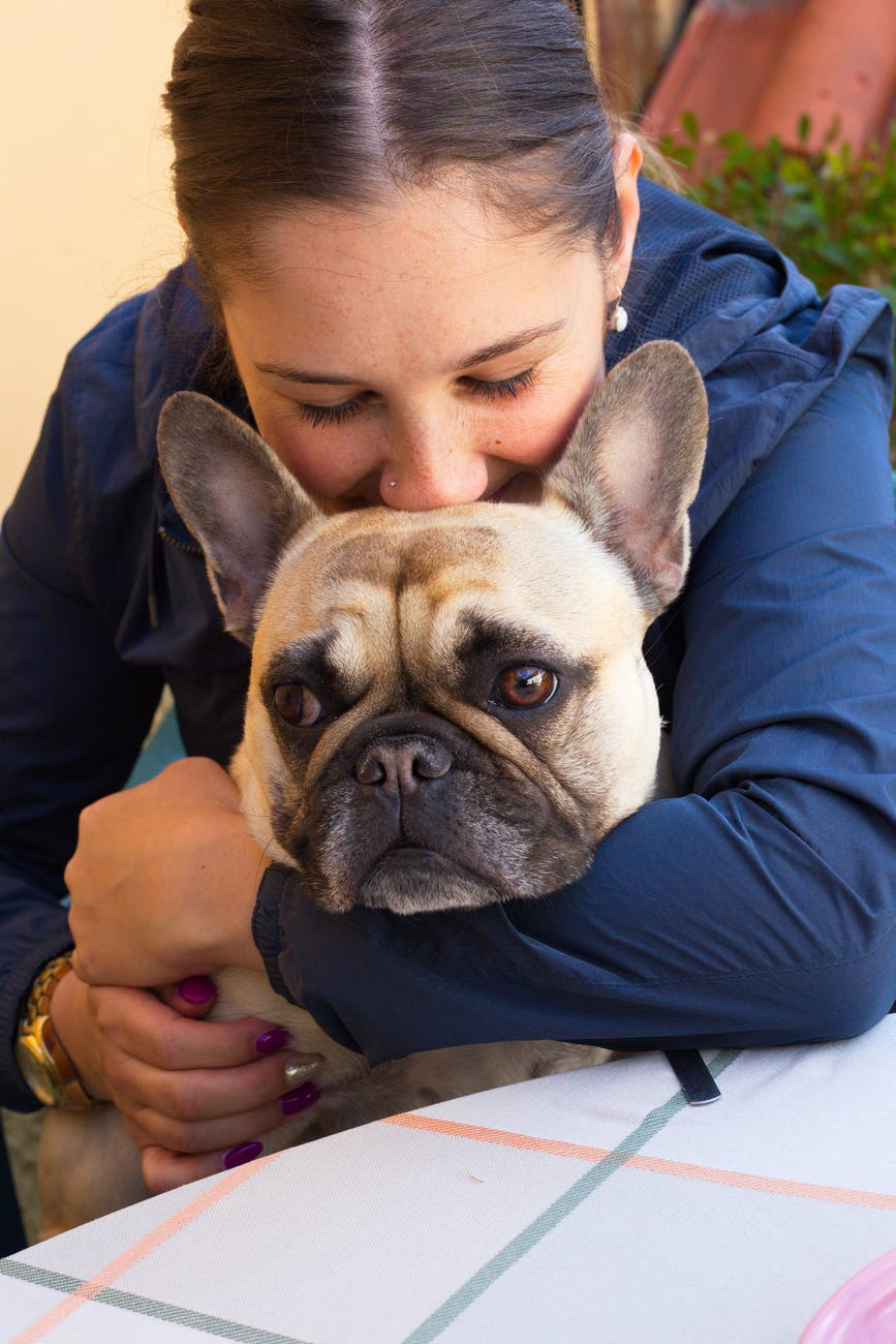 Is A French Bulldog For Me?