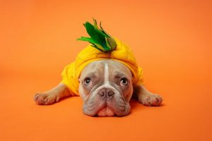 Fruits and vegetables for your Frenchie